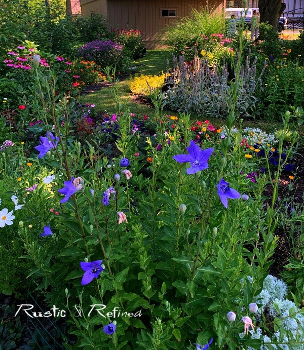 Lake County Indiana Master Garden Walk Part 1. A stunning urban yard that rivals any master gardeners garden!
