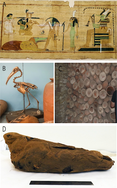 Genetic analysis of sacred ibis mummies sheds light on early Egyptian practices