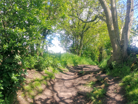 Wymondley bridleway 22 between points 7 and 8