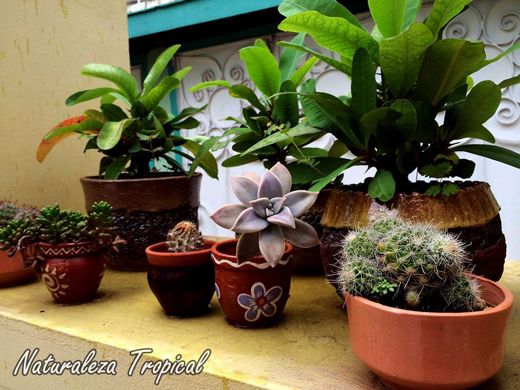 Naturaleza tropical aspectos a tener en cuenta si quieres - Plantas para terrazas ...