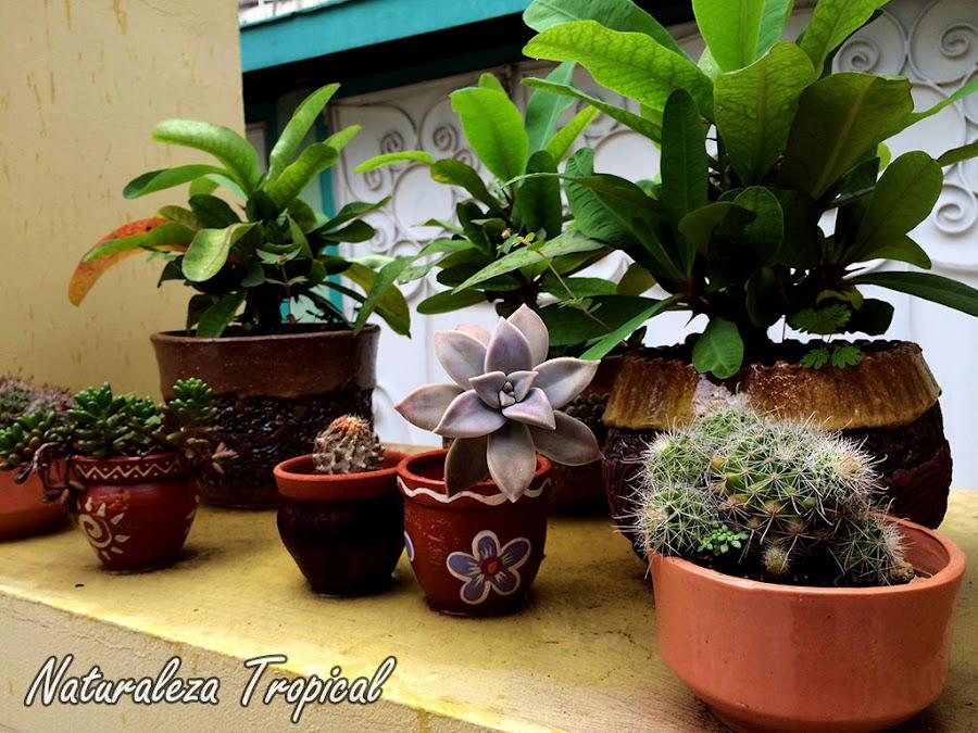 Colección de plantas en terraza pequeña