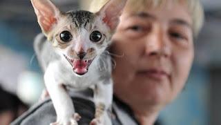 ¿Por qué los gatos vuelven a maullar cuando les hablas?