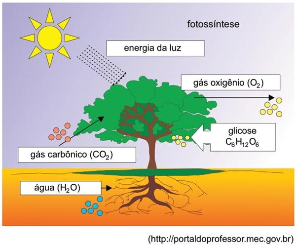 Analise o esquema, que representa o processo de fotossíntese