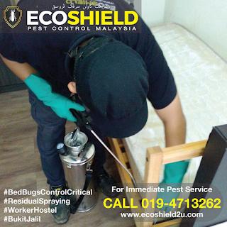 Bed BUgs Control - Pest Control Selangor Malaysia