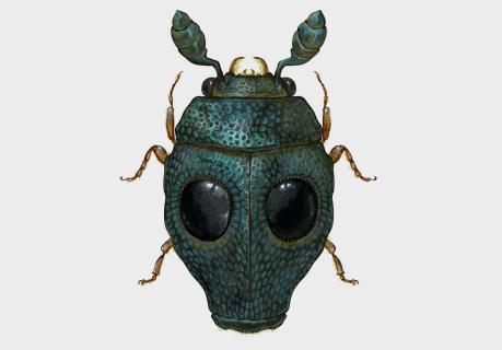 Richard Wilkinson's Arthropoda Iconicus Volume 1