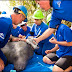SeaWorld Releases Manatee Rescued in South Carolina