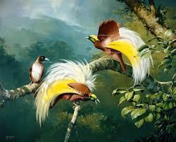 Salah Satu Jenis Cendrawasih Yang Sangat Terkenal Berasal Dari Genus Paradisaea Karena Memiliki Warna Yang Sangat Menarik Dimana Memiliki Warna Kuning
