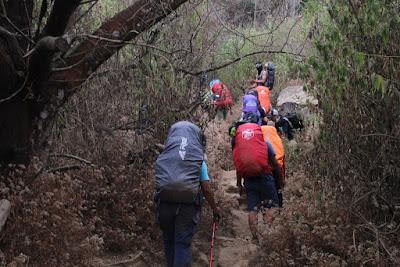 Track Jalur Gunung Sindoro