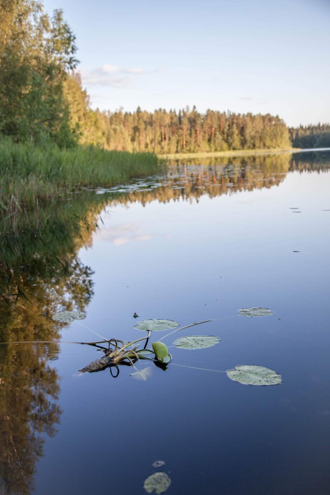 Kortejärvi Tampere Kintulammi