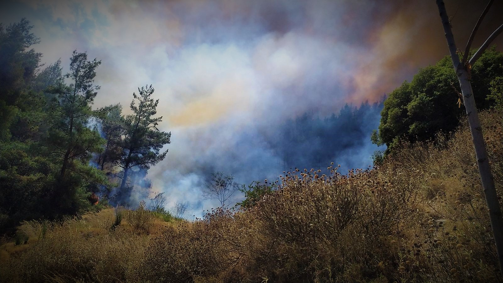 41 δασικές πυρκαγιές στην Ελλάδα μέσα σε ένα 24ωρο