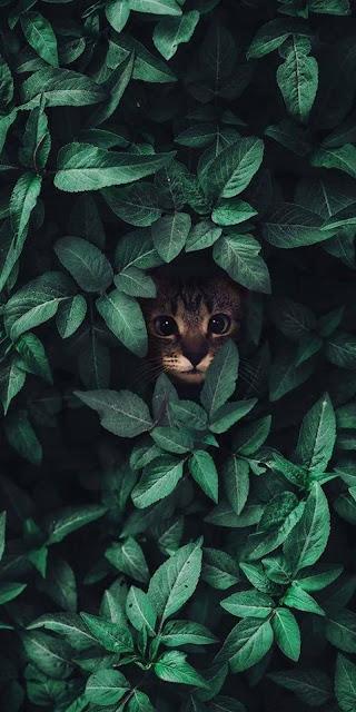 Hình nền chú mèo lẫn trốn giữa những chiếc lá xanh
