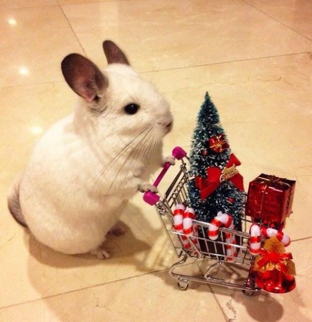 tiernos animales Navidad