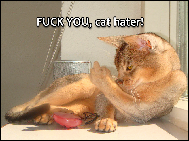 "Photoshopped Cat picture • Angry cat show middle finger to cat haters: ""Fuck you!"""