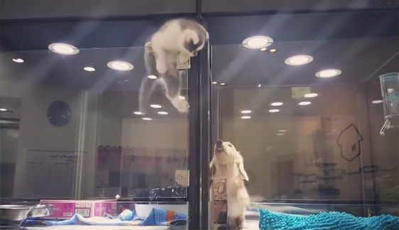 Kitten Escapes Pet Store Display To Meet Its Lonely Dog Friend