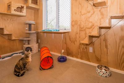 Cattery Kucing Terkenal