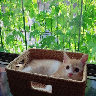 ゴーヤ カーテン 仔猫