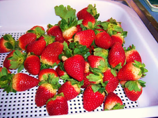 these are fresh strawberries with stems being washed in a white colander