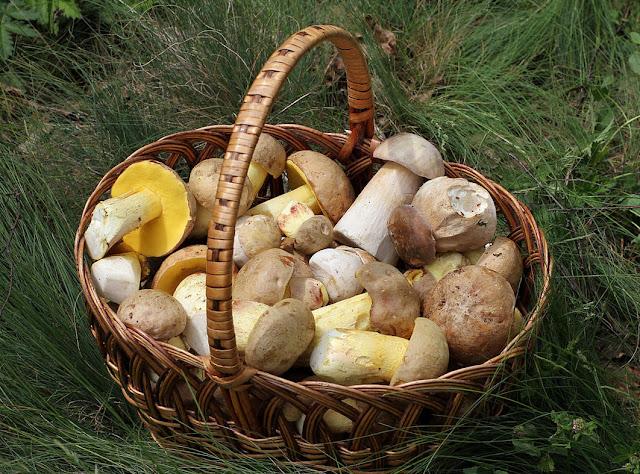 """Pilze selbst zu suchen, zu sammeln und dann zu verarbeiten, das ist schon selbst ein Akt des Genusses.""""  Heinz Kaul"""