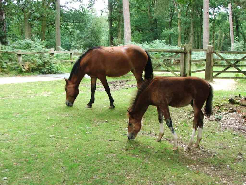 How to Effectively Care for and Manage a Foal After Birth