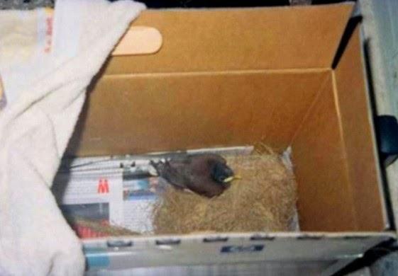 dalam perjalanan mungkin sudah biasa dilakukan Tips Membawa Burung Kicauan dalam Perjalanan