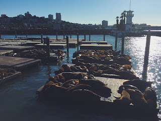 A picture of sea lions laying in the sun at Pier 39, Fisherman's Wharf, San Francisco