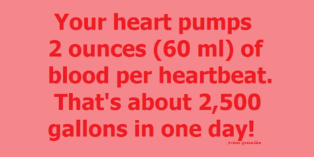Your heart pumps 2 ounces (60 ml) of blood per heartbeat. That's about 2,500 gallons in one day!
