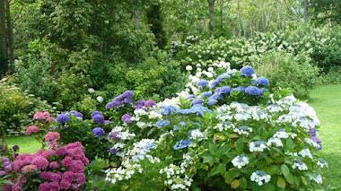 Jardin Shamrock y la colección de hortensias más importante del mundo
