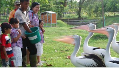 Fasilitas Allianz Ecopark Ancol Jakarta dan Harga Tiket Masuk Lokasi , Terbaru