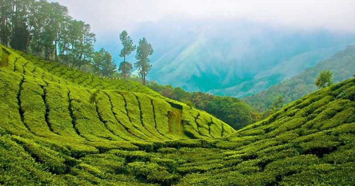 Restrictions on tourism including Munnar; Hotels are advised not to accept online bookings,www.thekeralatimes.com