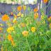 Flowers at Maryridge Tagaytay