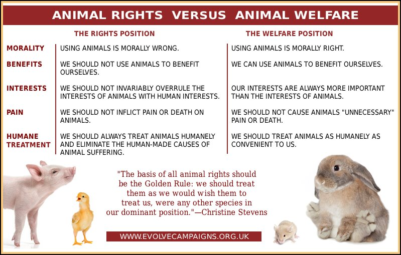 animal rights in addition to health articles