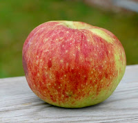 Oblate apple with partial red blush and a few bruises