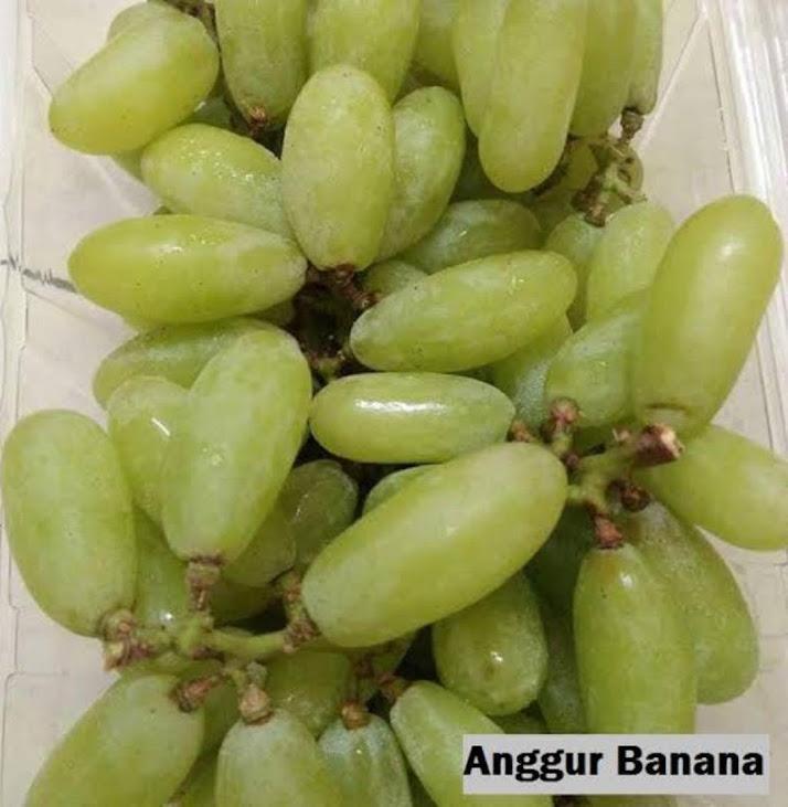 bibit anggur import banana Jawa Barat