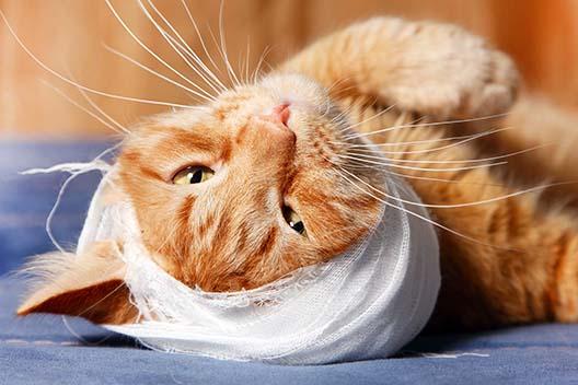 Jak opiekować się kotem po operacji?