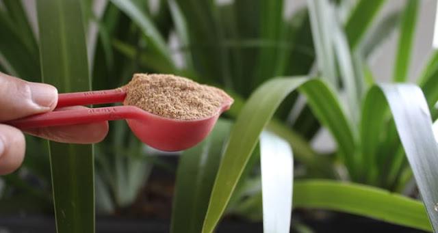 adubacao-organica-com-farinha-de-ossos