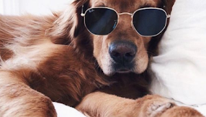 38 Some Cute and Lovely Pets Make You Have Fun