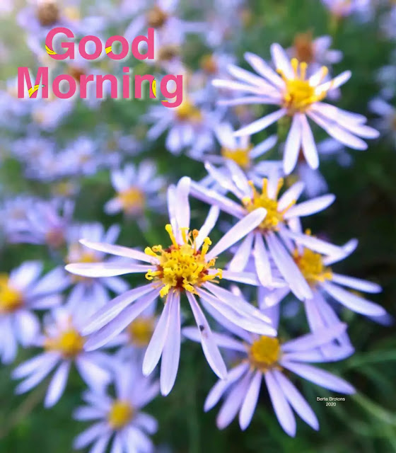 good morning flowers images download
