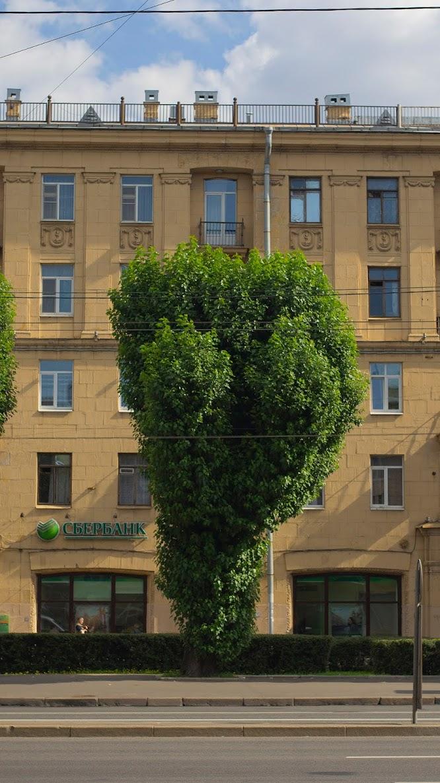 Дерево форма Питер СПб озеленение красота