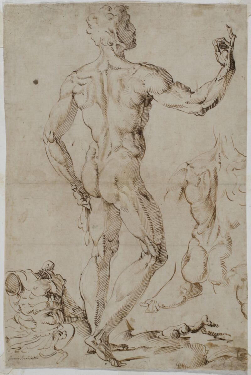 Spencer Alley Renaissance And Baroque Figure Drawing From Italy