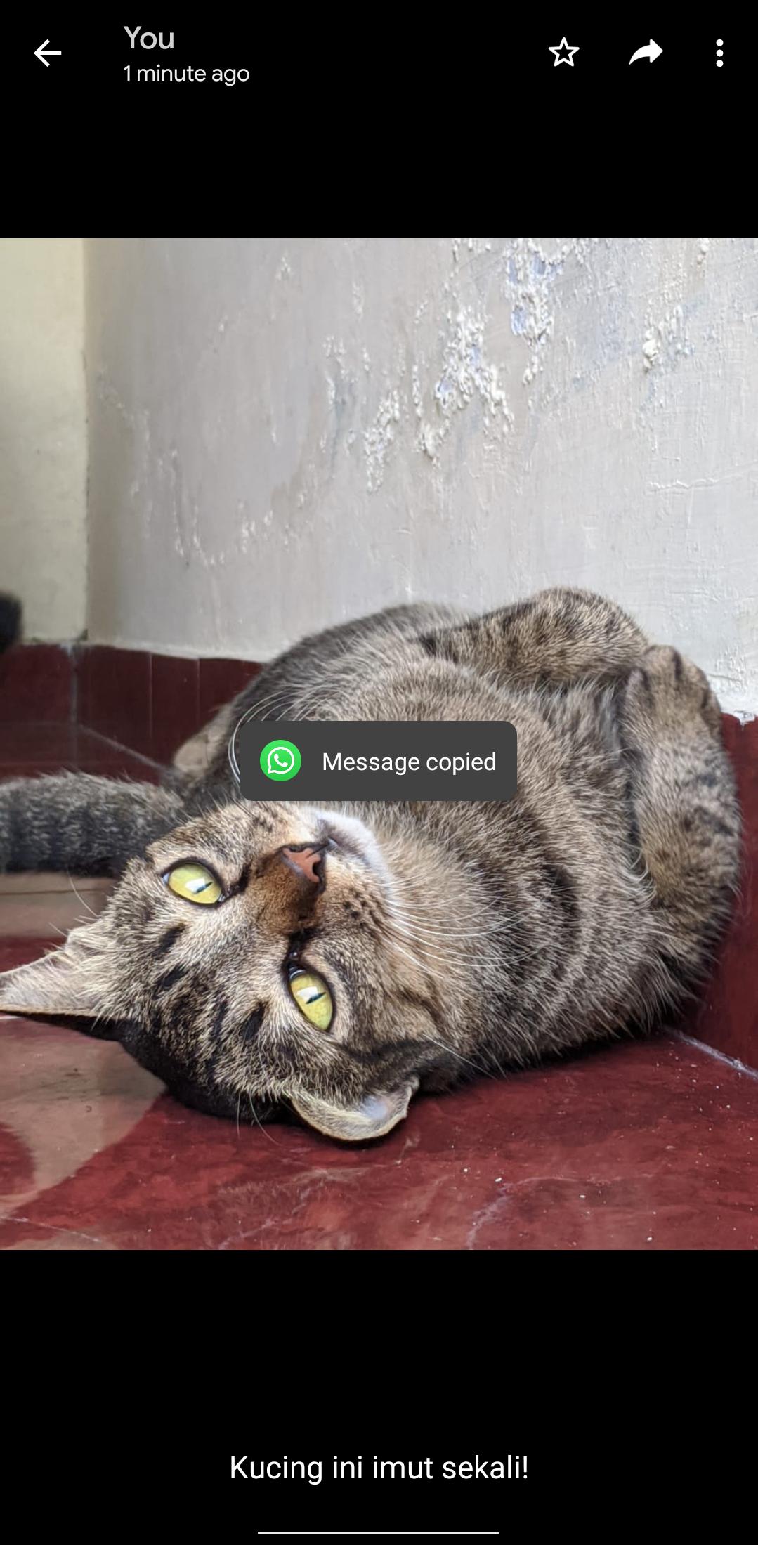 Lifehack Whatsapp - Copy Caption Teks Yang Dikirim Bersama Gambar Oleh Temanmu di Whatsapp