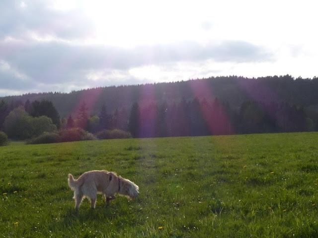 Mediakit Fräuleins wunderbare Welt Kooperation Blog Depression Alltag Hund Dortmund Ruhrgebiet wandern Ausflugstipps Camping Zelten Natur