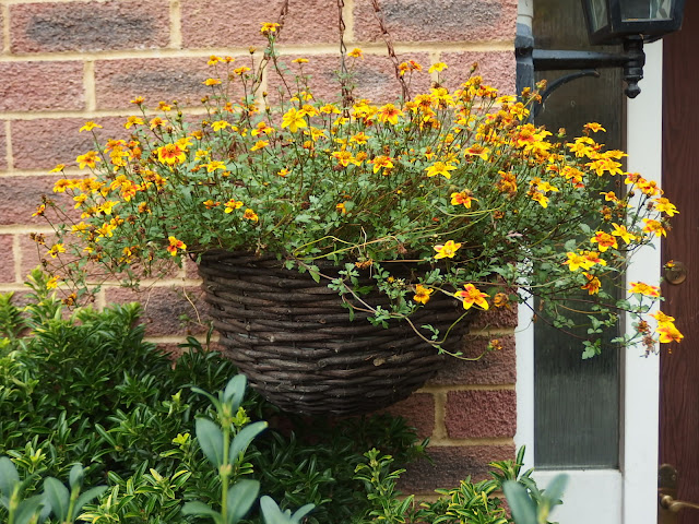 Last year's hanging basket which welcomed me home