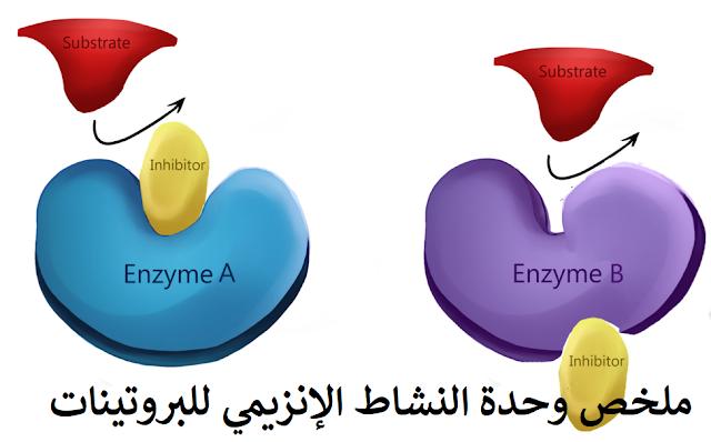 ملخص وحدة النشاط الإنزيمي للبروتينات