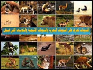 الثدييات البحرية, الثدييات المشيمية, الثدييات تلد ام تبيض, الثدييات الكيسية, الثدييات الاولية, الثدييات والطيور والزواحف والبرمائيات, الثدييات عديمة الاسنان, الثدييات المهددة بالانقراض, الثدييات للاطفال, الثدييات التي تبيض