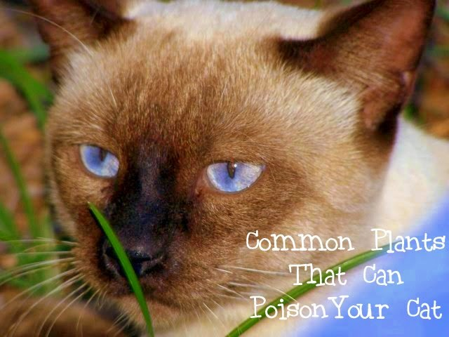 Common plants that are toxic and can poison your cat