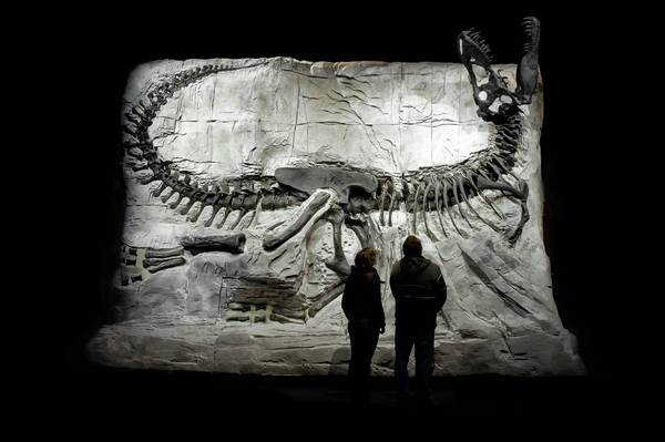 Canadian Badlands offer a hotbed of dinosaur fossils