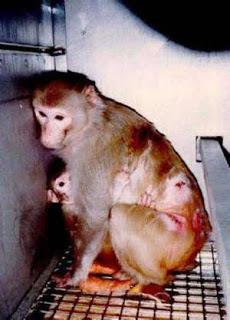 vivisezione vergogna