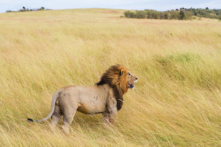 wild life photograph
