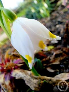 zdjecia wiosny
