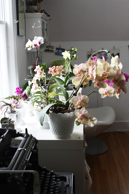 orchids, phalaenopsis, houseplants, flowers, flowering houseplants, Anne Butera, My Giant Strawberry